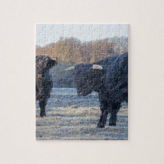 Zwei schwarze schottische Hochländer in gefrorener Puzzle