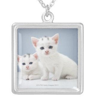 Zwei sehr junge weiße Kätzchen starren neugierig Versilberte Kette