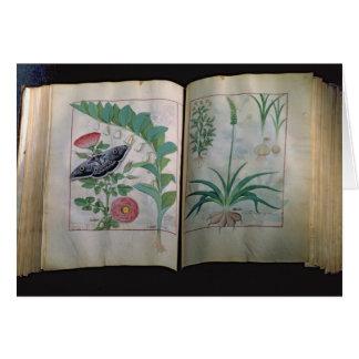 Zwei Seiten, die Rose und Knoblauch darstellen Karte