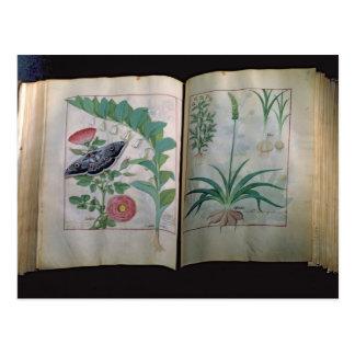 Zwei Seiten, die Rose und Knoblauch darstellen Postkarte