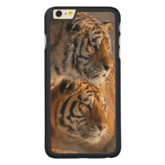 Zwei sibirische Tiger zusammen, China Carved® Maple iPhone 6 Plus Hülle