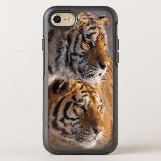 Zwei sibirische Tiger zusammen, China OtterBox Symmetry iPhone 8/7 Hülle