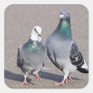 Zwei Tauben Quadratischer Aufkleber