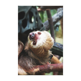 Zwei Toed Sloth ausgedehnten Leinwand-Druck Leinwanddruck