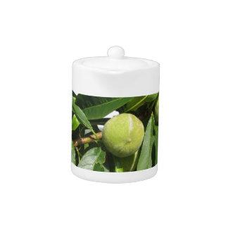 Zwei unausgereifte grüne Pfirsiche, die an einem