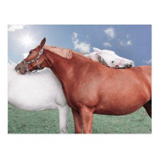 zwei verliebte Pferde Postkarte