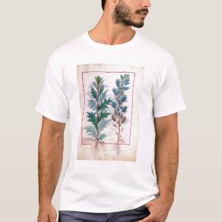 Zwei Vielzahl von Artemesia T-Shirt