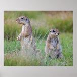 Zwei wachsame Grundeichhörnchen, Jamestown Bezirk, Posterdrucke