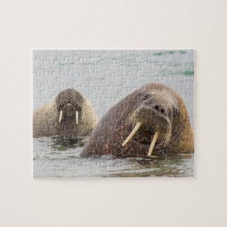Zwei Walrosse im Wasser, Norwegen Puzzle