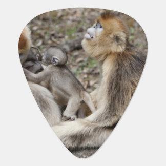 Zwei weibliche goldene Affen mit Neugeborenen Plektron