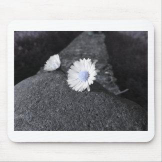 Zwei weiße Gänseblümchen, die auf dem Stein am Mousepad