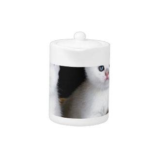 Zwei weiße Kätzchen im Korb auf schwarzem