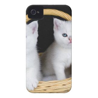 Zwei weiße Kätzchen im Korb auf schwarzem iPhone 4 Cover