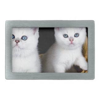 Zwei weiße Kätzchen im Korb auf schwarzem Rechteckige Gürtelschnalle