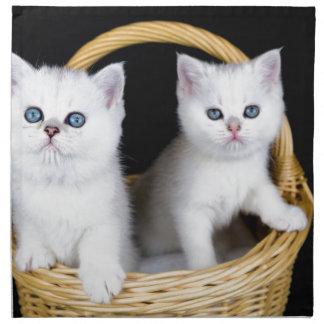 Zwei weiße Kätzchen im Korb auf schwarzem Serviette