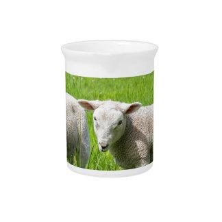 Zwei weiße niederländische Schafe in der grünen Getränke Pitcher