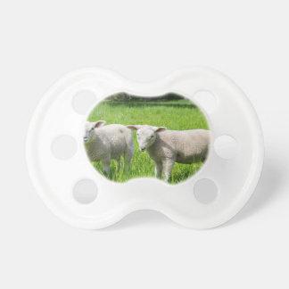 Zwei weiße niederländische Schafe in der grünen Schnuller