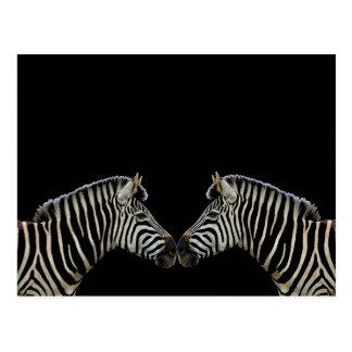 Zwei Zebras-Nase zum zu riechen Postkarte
