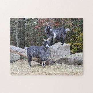 Zwei Ziegen Puzzle