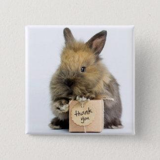 Zwergartiges Kaninchen Getty Bild-| Quadratischer Button 5,1 Cm